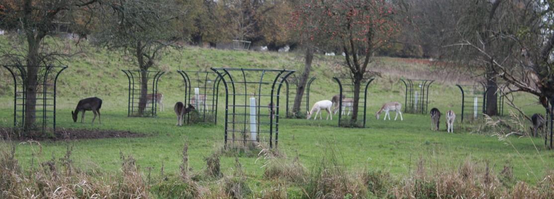 Estate Tree Guard