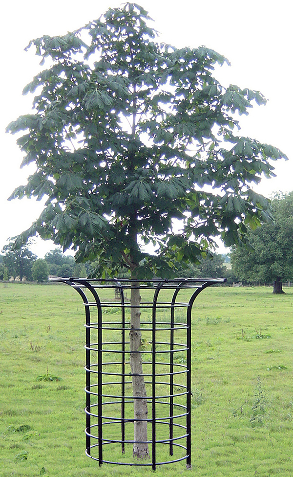 Tree Guards Gallery Cotswold Decorative Ironworkers